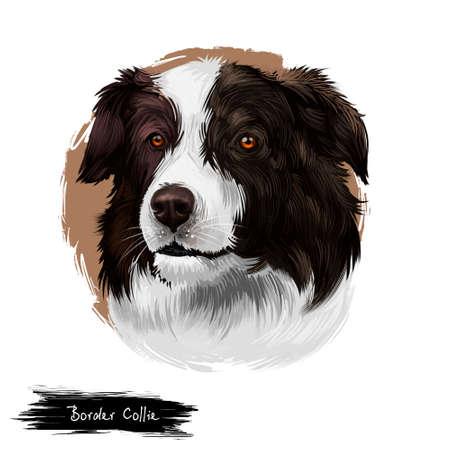 Border Collie, Scottish Sheepdog dog digital art illustration isolated on white background. United Kingdom origin herding dog. Cute pet hand drawn portrait. Graphic clip art design for web, print. Stock Illustration - 130840708