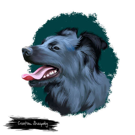 Croatian Sheepdog, Hrvatski ovcar, Kroatischer Schaferhund dog digital art illustration isolated on white background. Croatioa origin herding dog. Cute pet hand drawn portrait. Graphic clip art design