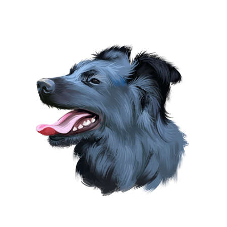 Croatian Sheepdog, Hrvatski ovcar, Kroatischer Schaferhund dog digital art illustration isolated on white background. Croatioa origin herding dog. Cute pet hand drawn portrait. Graphic clip art design Imagens - 130840711
