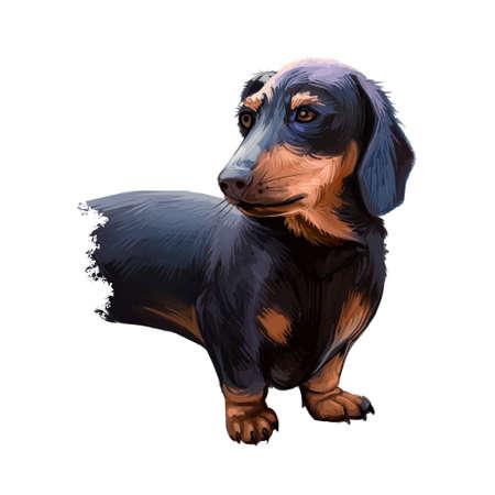 Dachshund, Weenie Dog, Teckel, badger dog digital art illustration isolated on white background. German origin scenthound dog. Cute pet hand drawn portrait. Graphic clip art design for web, print.