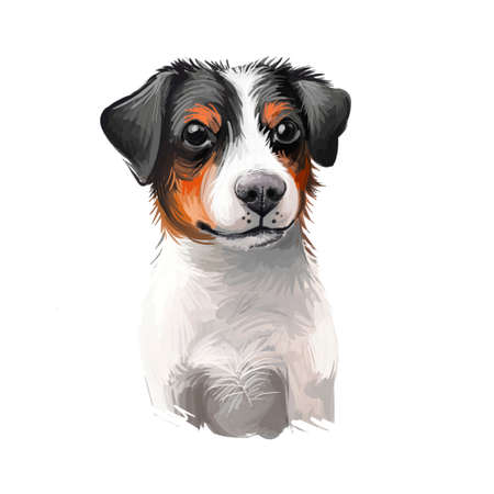 Danish Swedish Farmdog, Scanian terrier dog digital art illustration isolated on white background. Denmark and Sweden origin guarding dog. Cute pet hand drawn portrait. Graphic clip art design 스톡 콘텐츠 - 130841484