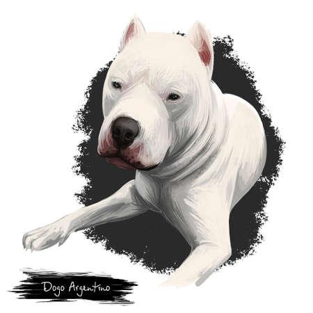 Dogo Argentino, Argentine Dogo, Argentine Mastiff dog digital art illustration isolated on white background. Argentina origin guardian hunting dog. Cute pet hand drawn portrait. Graphic clipart design