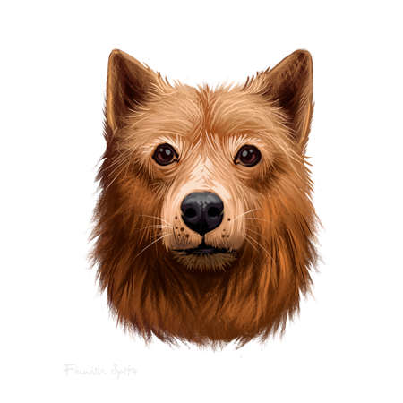 Finnish Spitz, Loulou Finois, Finnish Hunting Dog digital art illustration isolated on white background. Finland origin hunting dog. Cute pet hand drawn portrait. Graphic clipart design for web, print