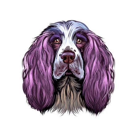 English Springer Spaniel, Springer Spaniel dog digital art illustration isolated on white background. England origin gun dog. Cute pet hand drawn portrait. Graphic clip art design for web, print