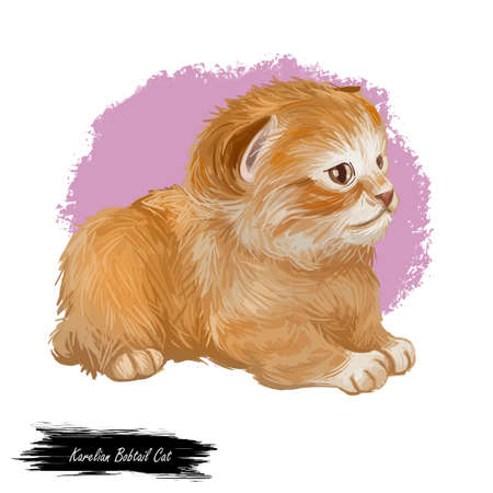 Karelian Bobtail uncommon breed in sitting pose, domestic pet. Cat isolated on white background. Digital art illustration of hand drawn adorable pet for web. Kitten with shorthair coat and brown eyes Фото со стока