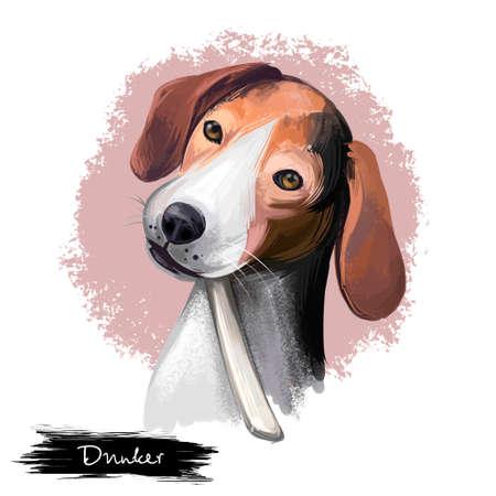 Dunker, Norwegian Hound dog digital art illustration isolated on white background. Norwegian origin scenthound dog. Cute pet hand drawn portrait. Graphic clip art design for web and print