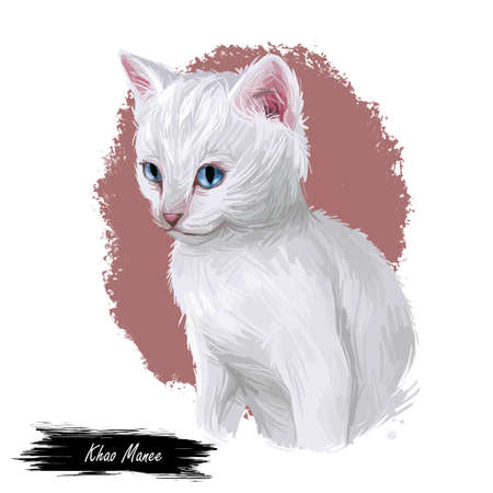 Khao Manee uncommon breed in sitting pose. Kitty domestic animal isolated on white background. Digital art illustration of hand drawn cat for web. Small kitten with shorthair coat and blue eyes Stock fotó