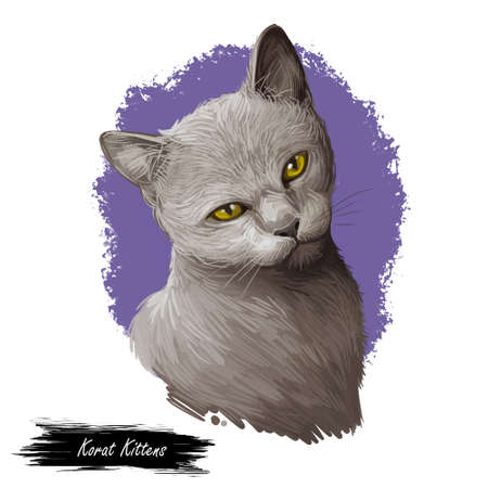 Korat kitten with yellow eyes isolated on white background. Digital art illustration of hand drawn tamed pet for web. Adorable animal medium size and short haired, cat with mustache looking up