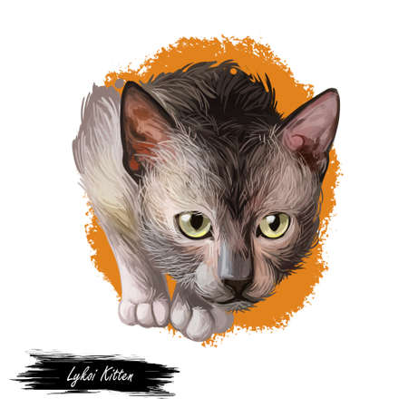 Lykoi kitten with green eyes posing isolated on white background. Digital art illustration of hand drawn standing domestic cat for web. Adorable animal with shorthair coat, pet with mustache looking