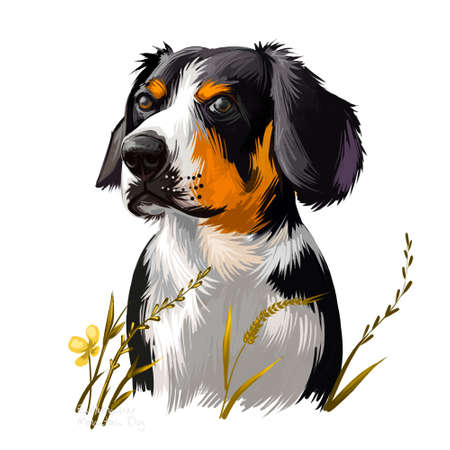 Entlebucher Mountain Dog, Entlebucher Sennenhund dog digital art illustration isolated on white background. Switzerland origin guardian dog. Cute pet hand drawn portrait. Graphic clip art design Stock Photo