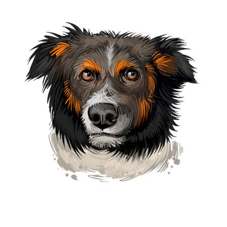English Shepherd, Farm Collie dog digital art illustration isolated on white background. England origin herding dog. Cute pet hand drawn portrait. Graphic clip art design for web and print
