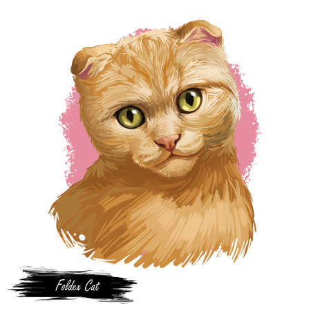 Foldex cat looking isolated on white background. Digital art illustration of hand drawn fold kitty for web. Kitten with ruddy coat with deep brown eyes. Little pet with mustache, sable fur watercolor Фото со стока