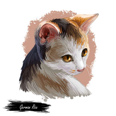 German rex isolated on white background. Digital art illustration of hand drawn domestic kitty for web. Kitten with colorful coat with deep eyes. Little pet with mustache, sable fur watercolor