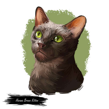 Havana brown kitten with green eyes isolated on white background. Digital art illustration of hand drawn domestic cat for web. Adorable animal medium size with ruddy coat, pet with mustache looking up