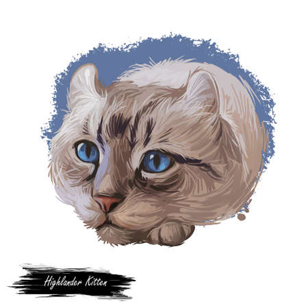 Highlander kitten lying on paw on white background. Digital art illustration of hand drawn kitty for web. Head of kitten with deep blue eyes looking. Portrait view of domestic animal with mustache Фото со стока