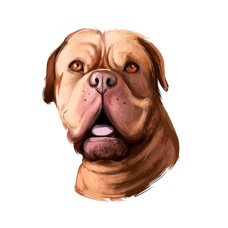 Dogue de Bordeaux, Bordeaux Mastiff, French Mastiff dog digital art illustration isolated on white background. French origin guardian dog. Cute pet hand drawn portrait. Graphic clip art design