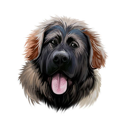 Georgian Shepherd Dog breed digital art illustration isolated on white. Popular puppy portrait with text. Cute pet hand drawn portrait. Graphic clip art design