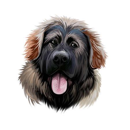 Georgian Shepherd Dog breed digital art illustration isolated on white. Popular puppy portrait with text. Cute pet hand drawn portrait. Graphic clip art design