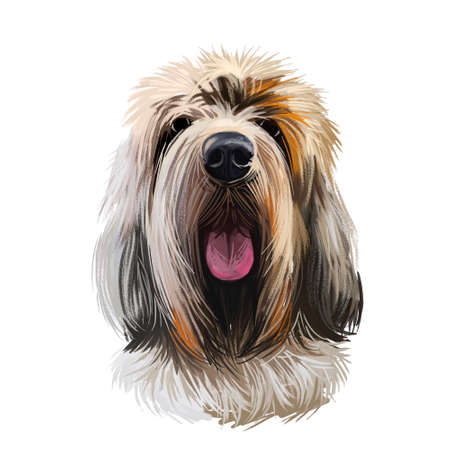 Grand Griffon Vend en, Large Vend en Griffon dog digital art illustration isolated on white background. France origin hunting dog. Pet hand drawn portrait. Graphic clip art design for web, print Фото со стока
