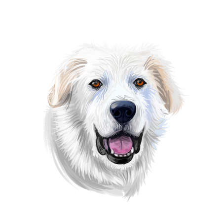 Great Pyrenees, Pyrenean Mountain, Pyr, GP, PMD dog digital art illustration isolated on white background. France, Spain origin guardian, working dog. Pet hand drawn portrait. Graphic clip art design