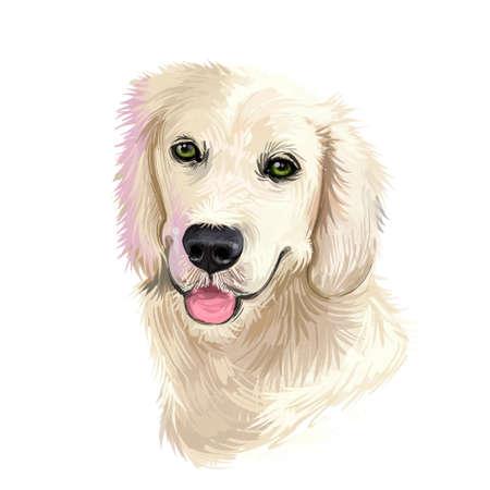 Golden Retriever dog digital art illustration isolated on white background. Scotland origin large-sized hunting, gun, sporting dog. Pet hand drawn portrait. Graphic clip art design for web, print Stock Photo