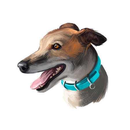 Greyhound, English Greyhound dog digital art illustration isolated on white background. European origin racing, hunting dog. Pet hand drawn portrait. Graphic clip art design for web, print Stockfoto
