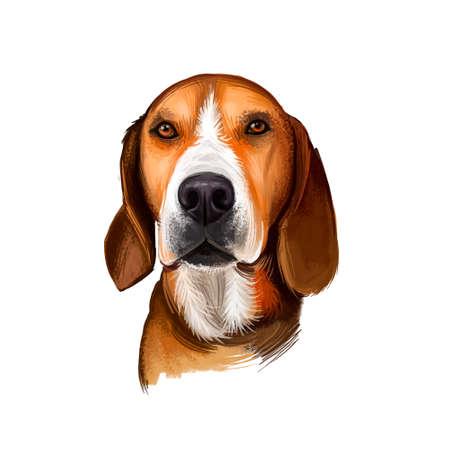 Hamiltonstovare, Hamilton Hound, Swedish Foxhound, Hamilton dog digital art illustration isolated on white background. Sweden origin hunting dog. Pet hand drawn portrait. Graphic clip art design Stock Photo