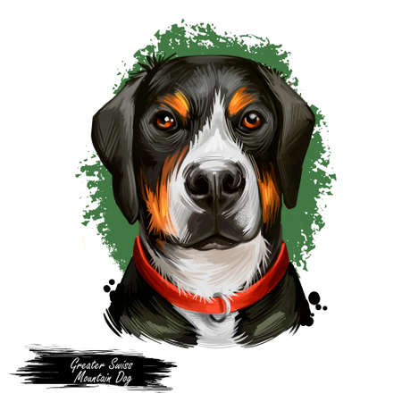Greater Swiss Mountain Dog digital art illustration isolated on white background. Switzerland origin guardian working herding dog. Pet hand drawn portrait. Graphic clip art design for web, print
