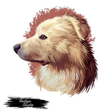 Himalayan Sheepdog, Bhotia, Himalayan Shepherd dog digital art illustration isolated on white background. Nepal, China, India origin guardian dog. Pet hand drawn portrait. Graphic clip art design