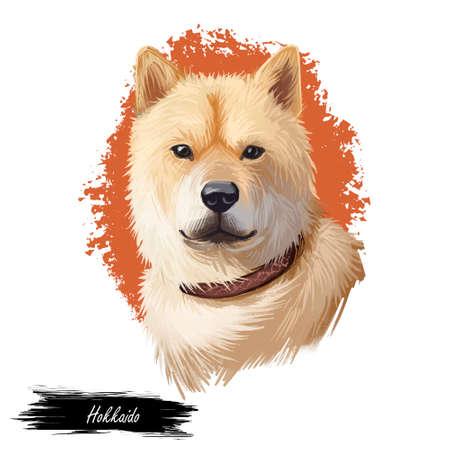 Hokkaido, Do-ken, Ainu-ken, Seta, Ainu dog, Hokkaido-Ken dog digital art illustration isolated on white background. Japan origin asian spitz dog. Pet hand drawn portrait. Graphic clip art design