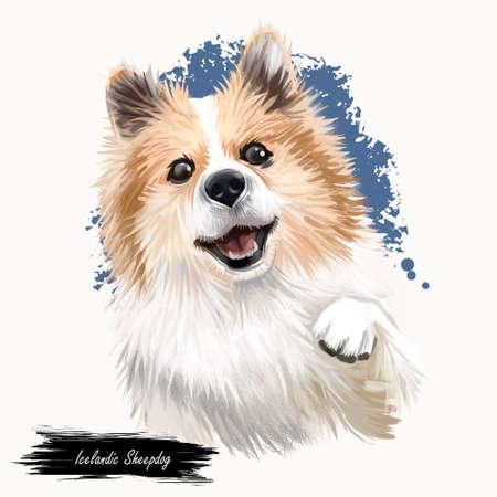 Icelandic Sheepdog, Icelandic Spitz, Iceland Dog digital art illustration isolated on white background. Iceland origin herding dog. Pet hand drawn portrait. Graphic clip art design for web, pet print