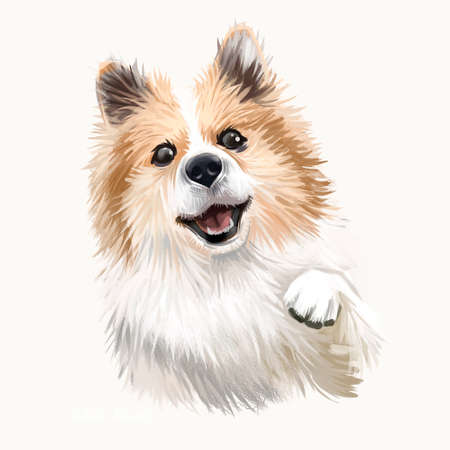 Icelandic Sheepdog, Icelandic Spitz, Iceland Dog digital art illustration isolated on white background. Iceland origin herding dog. Pet hand drawn portrait. Graphic clip art design for web, pet print