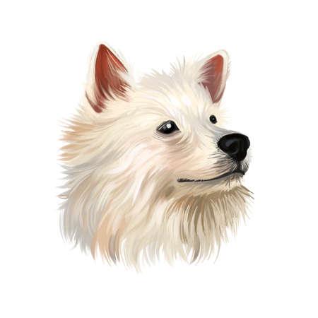Illustration d'art numérique chien Spitz indien isolé sur fond blanc. Chien spitz de groupe utilitaire d'origine indienne. Portrait dessiné à la main pour animaux de compagnie. Conception graphique de clip art pour le web, l'impression. Portrait d'animal mignon, dessiné à la main
