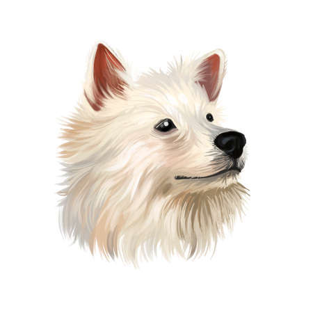 Indian Spitz dog digital art illustration isolated on white background. Indian origin utility group spitz dog. Pet hand drawn portrait. Graphic clip art design for web, print. Cute pet portrait, hand drawn