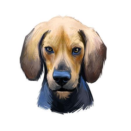 Kerry Beagle, An Pocadan Ciarraioch dog digital art illustration isolated on white background. Ireland origin scenthound hunting dog. Pet hand drawn portrait. Graphic clip art design for web print Stockfoto