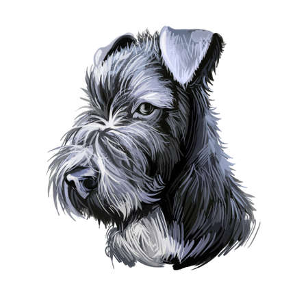Kerry Blue Terrier, Irish Blue Terrier, Kerry dog digital art illustration isolated on white background. Ireland origin terrier dog. Pet hand drawn portrait. Graphic clip art design for web print Stock Photo