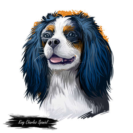 Cavalier King Charles Spaniel dog digital art illustration isolated on white background. Unite Kingdom origin toy companion dog. Pet hand drawn portrait. Graphic clip art design for web print