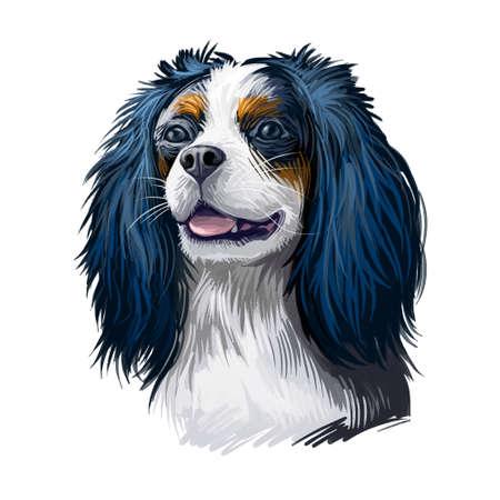 Cavalier King Charles Spaniel dog digital art illustration isolated on white background. Unite Kingdom origin toy companion dog. Pet hand drawn portrait. Graphic clip art design for web print