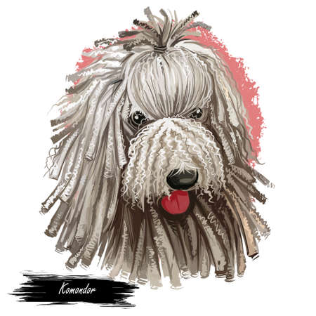 Komondor, Hungarian Komondor, Hungarian Sheepdog, Mop dog digital art illustration isolated on white background. Hungary origin working guardian dog. Pet hand drawn portrait. Graphic clip art design