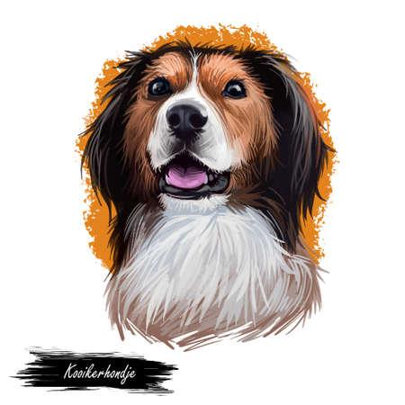 Kooikerhondje, Kooiker dog digital art illustration isolated on white background. Netherlands origin sporting utility gun dog. Pet hand drawn portrait. Graphic clip art design for web print
