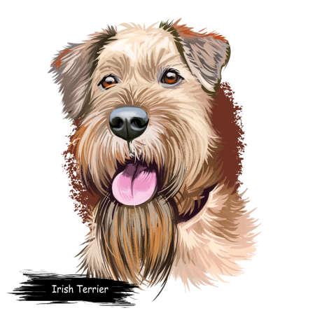Irish Red Terrier dog, Brocaire Rua digital art illustration isolated on white background. Ireland origin comoanion terrier dog. Pet hand drawn portrait. Graphic clip art design for web print Stock fotó