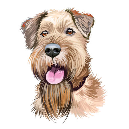 Irish Red Terrier dog, Brocaire Rua digital art illustration isolated on white background. Ireland origin comoanion terrier dog. Pet hand drawn portrait. Graphic clip art design for web print Stock Photo