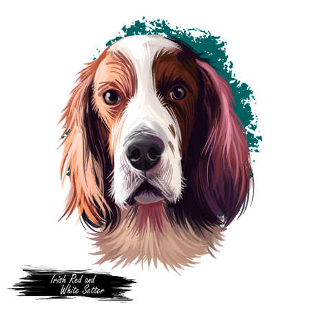 Irish Red and White Setter dog digital art illustration isolated on white background. Ireland origin sporting gundog hunting dog. Pet hand drawn portrait. Graphic clip art design for web, petprint Stock Photo