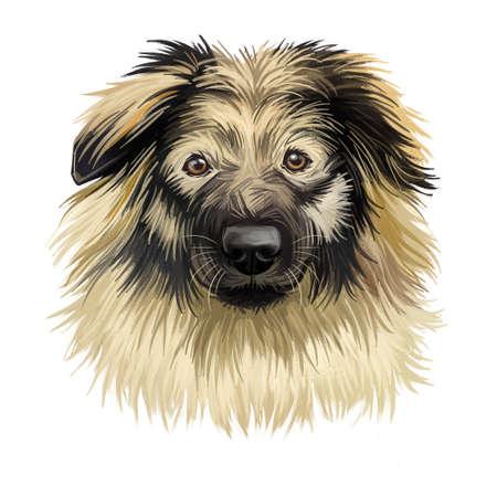 Karst Shepherd, Kraaki ovcar, Krasevec dog digital art illustration isolated on white background. Slovenia origin guardian mountain dog. Pet hand drawn portrait. Graphic clip art design for web print