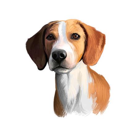 Hygenhund, Hygen Hound dog digital art illustration isolated on white background. Norwegian origin medium-sized scenthound dog. Pet hand drawn portrait. Graphic clip art design for web, print Reklamní fotografie