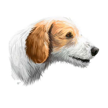 Istrian Coarse-haired Hound, Istrian Rough-coated Hound dog digital art illustration isolated on white background. Croatia origin scenthound dog. Pet hand drawn portrait. Graphic clip art design