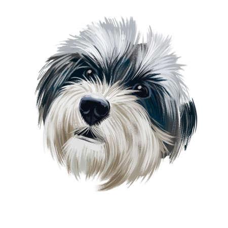 Havanese, Havanese Cuban Bichon, Havaneser dog digital art illustration isolated on white background. Cuba origin bichon type toy companion dog. Pet hand drawn portrait. Graphic clip art design