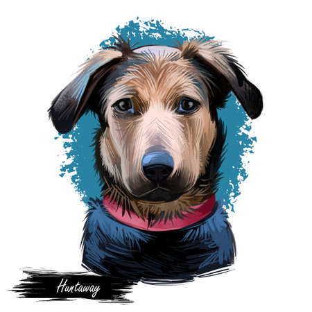 Huntaway, New Zealand Huntaway dog digital art illustration isolated on white background. New Zealand origin large tricolor working dog. Pet hand drawn portrait. Graphic clip art design for web, print