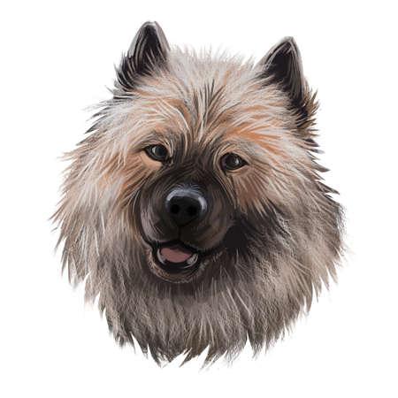 Keeshond, Dutch Barge Dog, German Spitz dog digital art illustration isolated on white background. Holland origin northern breed dog. Pet hand drawn portrait. Graphic clip art design for web print