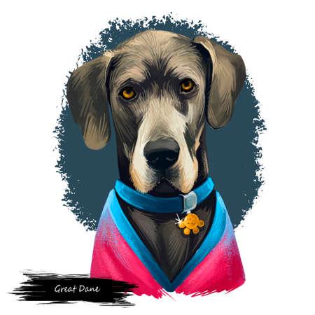 Great Dane, Deutsche Dogge, German Mastiff dog digital art illustration isolated on white background. Germany origin working, guardian dog. Pet hand drawn portrait. Graphic clip art design Archivio Fotografico